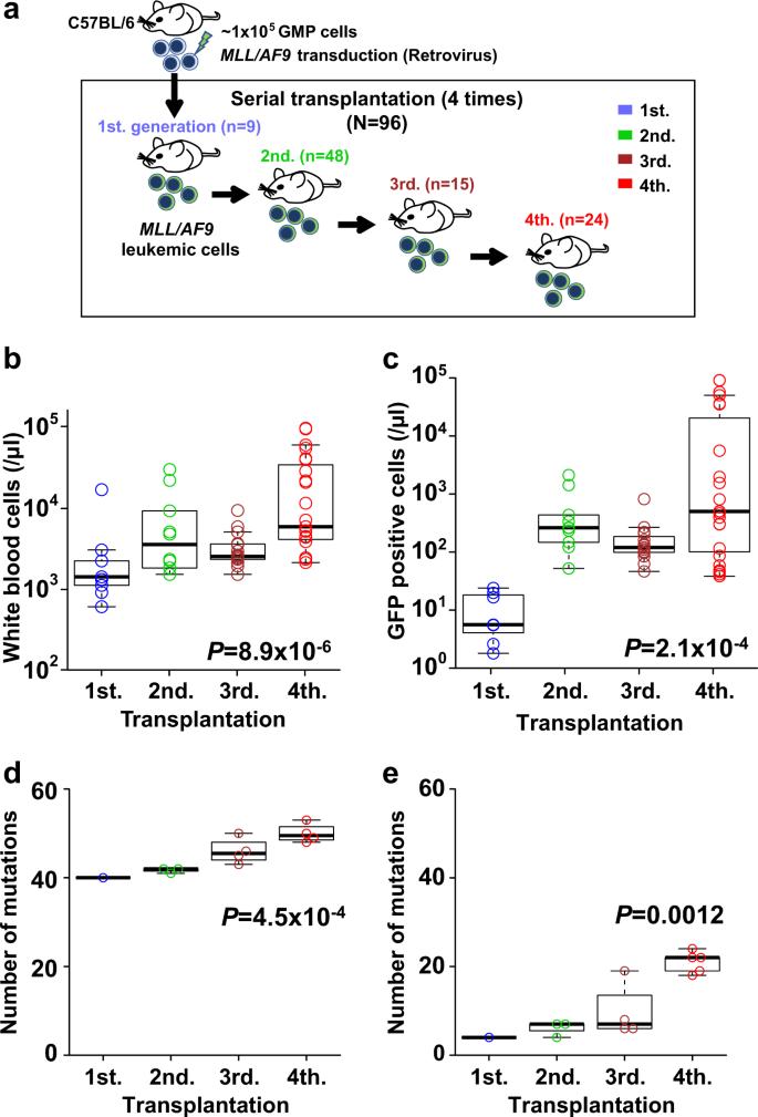 Molecular pathogenesis of disease progression in MLL