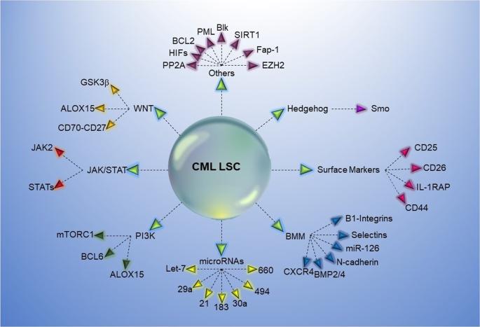 Chronic myeloid leukemia stem cells | Leukemia