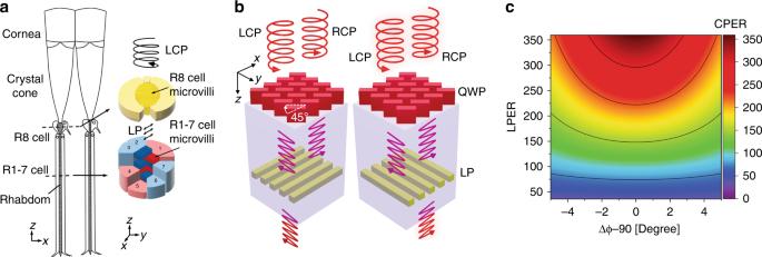 Publications | Yao Group: Nanoscale Optoelectronics Lab