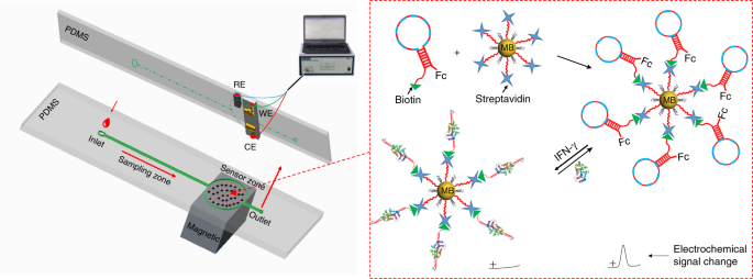 On-chip structure-switching aptamer-modified magnetic nanobeads for th