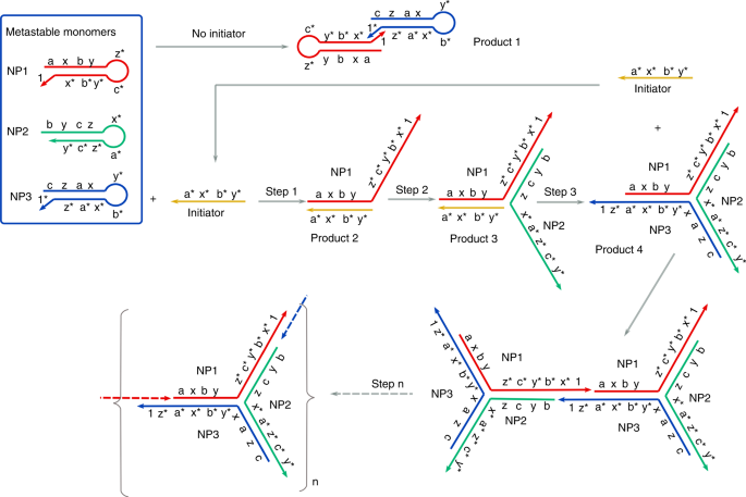 Branched hybridization chain reaction—using highly dimensional D