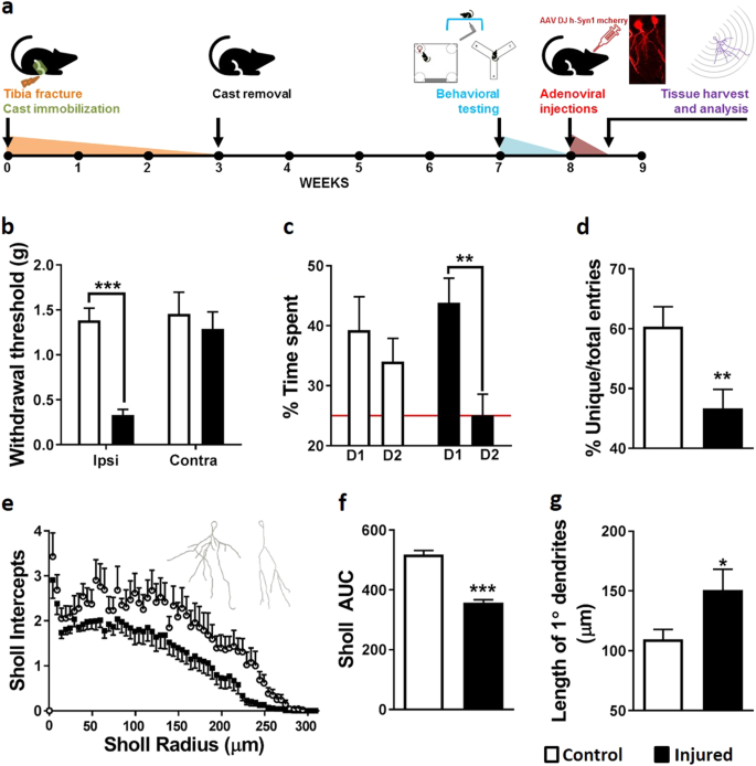 The hippocampal extracellular matrix regulates pain and