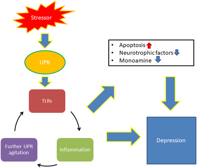 Linking unfolded protein response to inflammation and