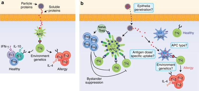 Antigen-specific regulatory T-cell responses against