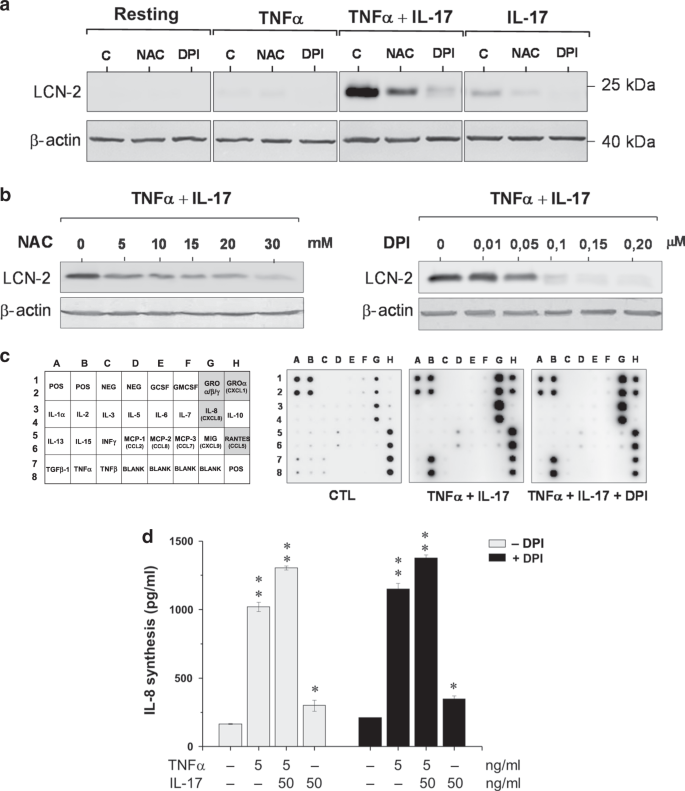 NOX1-derived ROS drive the expression of Lipocalin-2 in colonic