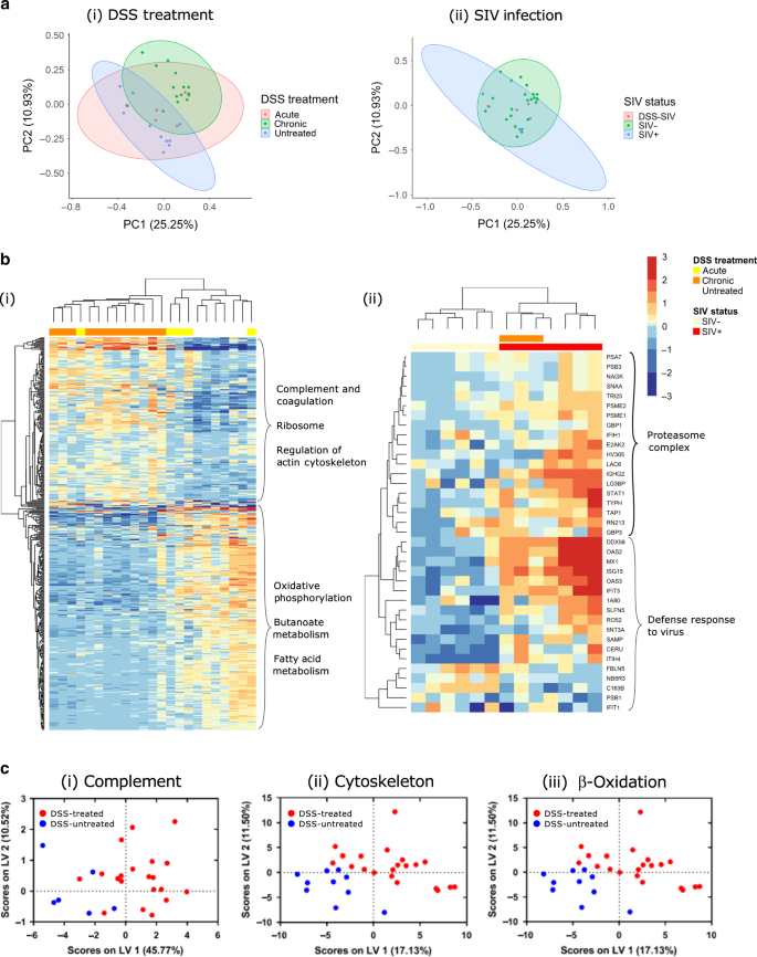 Intestinal proteomic analysis of a novel non-human primate