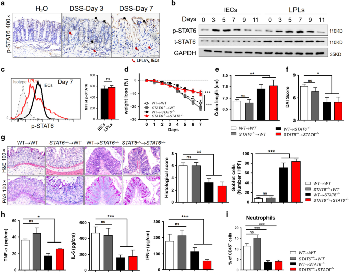 Non-hematopoietic STAT6 induces epithelial tight junction dysfunction