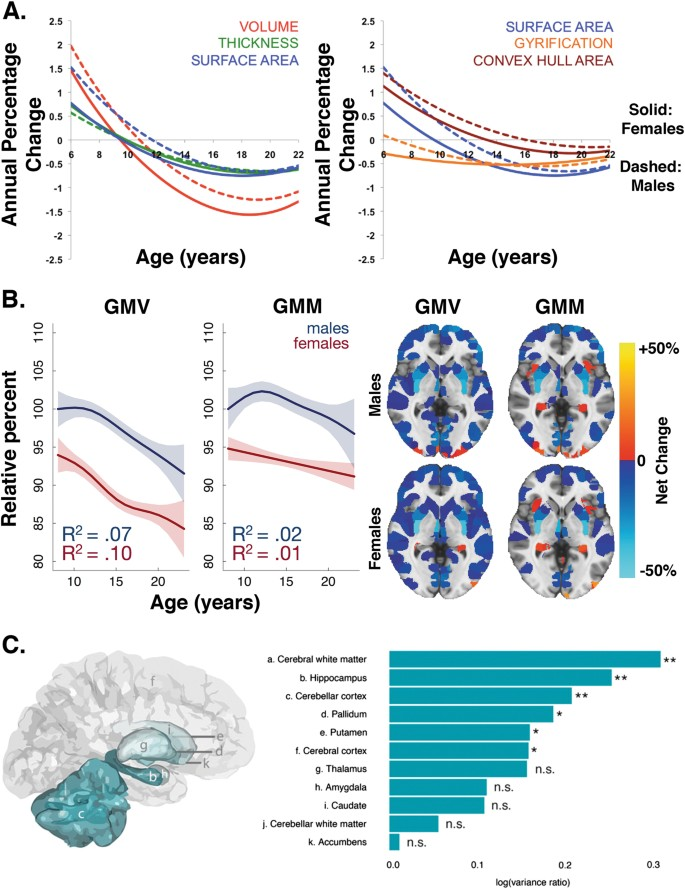 Sex differences in the developing brain: insights from