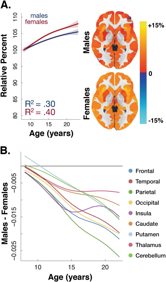 Gray Matter Density Increases During >> Sex Differences In The Developing Brain Insights From