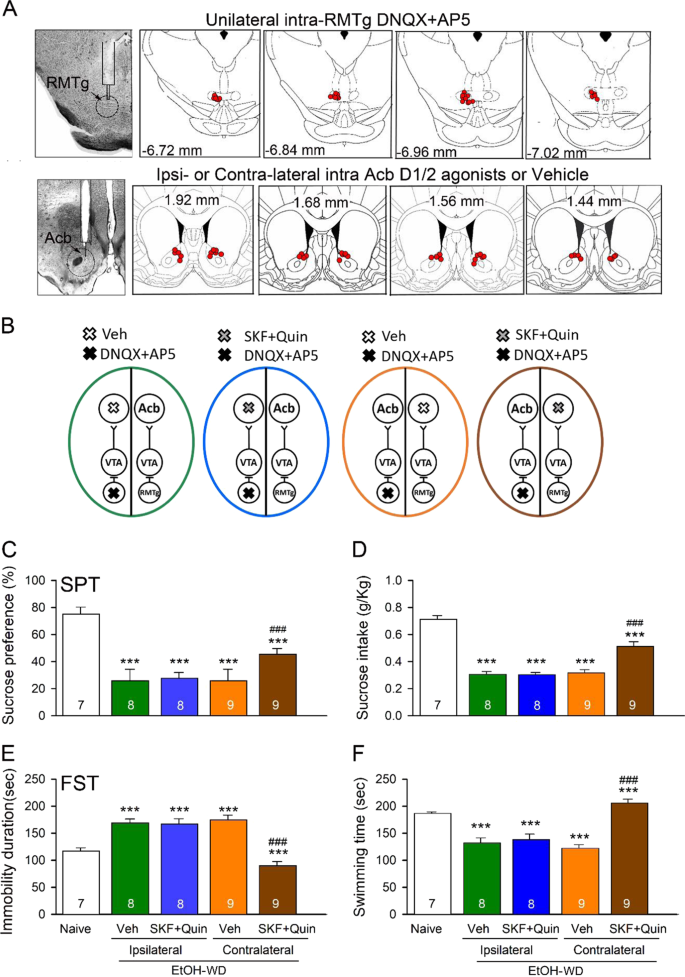 Alcohol withdrawal drives depressive behaviors by activating neurons