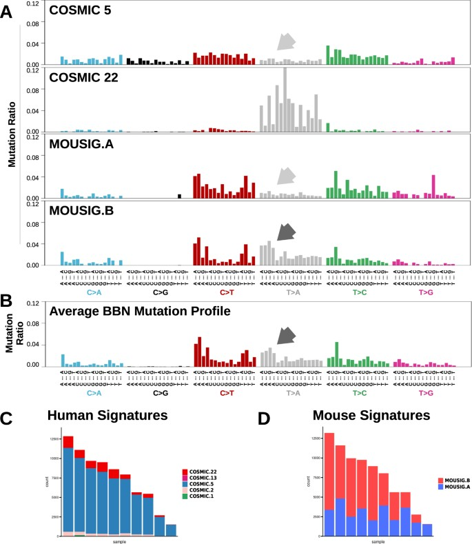 A Carcinogen-induced mouse model recapitulates the molecular
