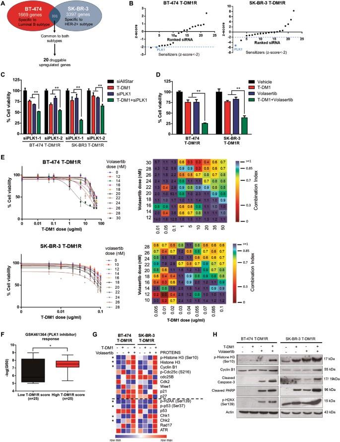 Targeting PLK1 overcomes T-DM1 resistance via CDK1-dependent