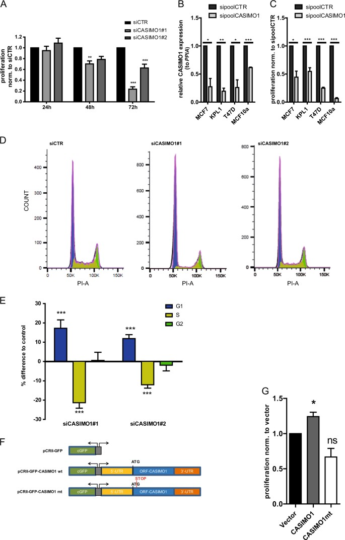The cancer-associated microprotein CASIMO1 controls cell