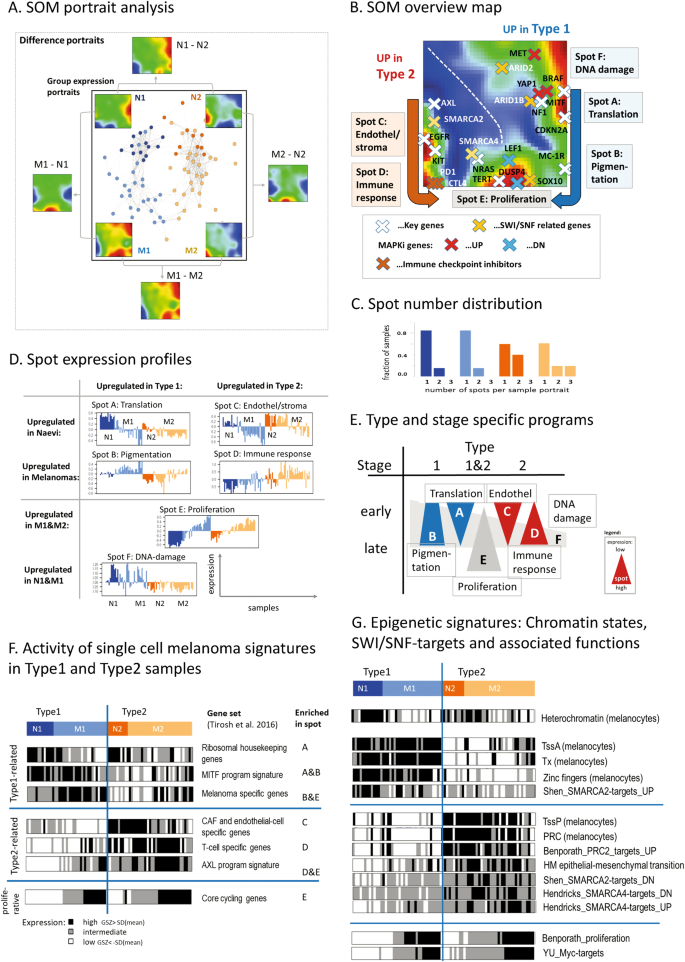 RNA-seq analysis identifies different transcriptomic types