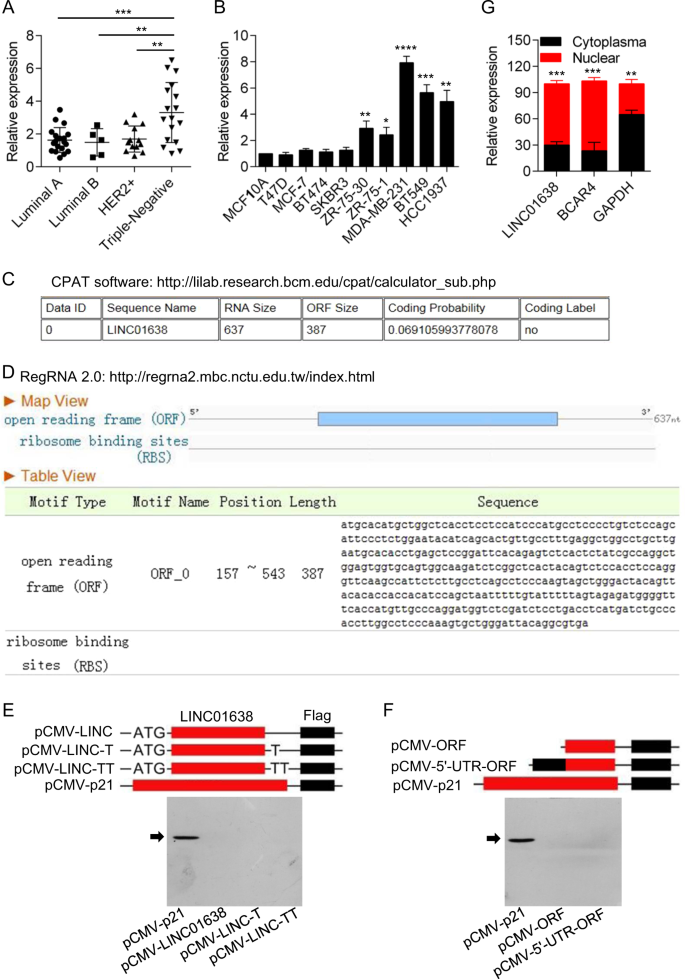LINC01638 lncRNA activates MTDH-Twist1 signaling by
