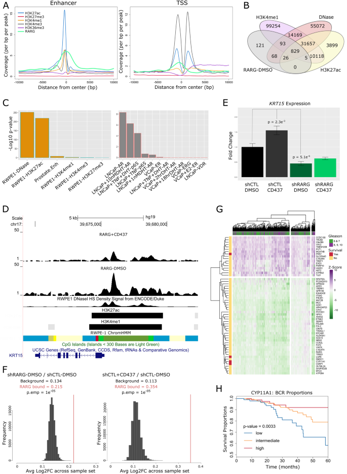 The miR-96 and RARγ signaling axis governs androgen