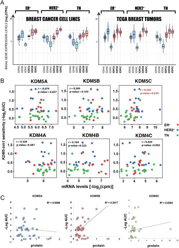 HER2-positive breast-cancer cell lines are sensitive to KDM5