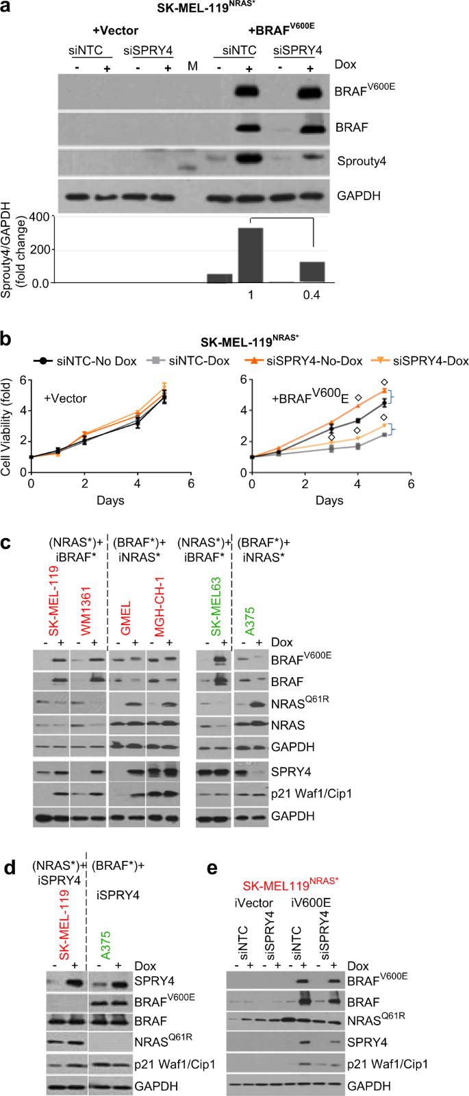 Growth suppression by dual BRAF(V600E) and NRAS(Q61) oncogene