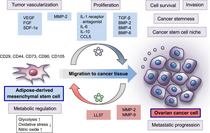 An Evolving Story Of The Metastatic Voyage Of Ovarian Cancer Cells Cellular And Molecular Orchestration Of The Adipose Rich Metastatic Microenvironment Oncogene