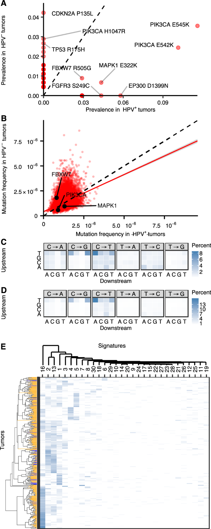 Apobec Induced Mutations And Their Cancer Effect Size In Head And Neck Squamous Cell Carcinoma Oncogene 25,036 likes · 47 talking about this. apobec induced mutations and their