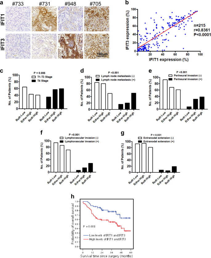 IFIT1 and IFIT3 promote oral squamous cell carcinoma