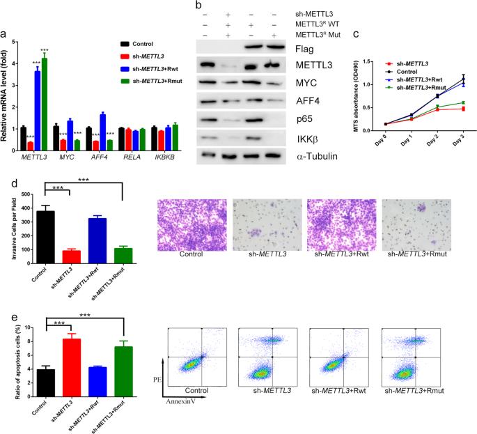 The m 6 A methyltransferase METTL3 promotes bladder cancer