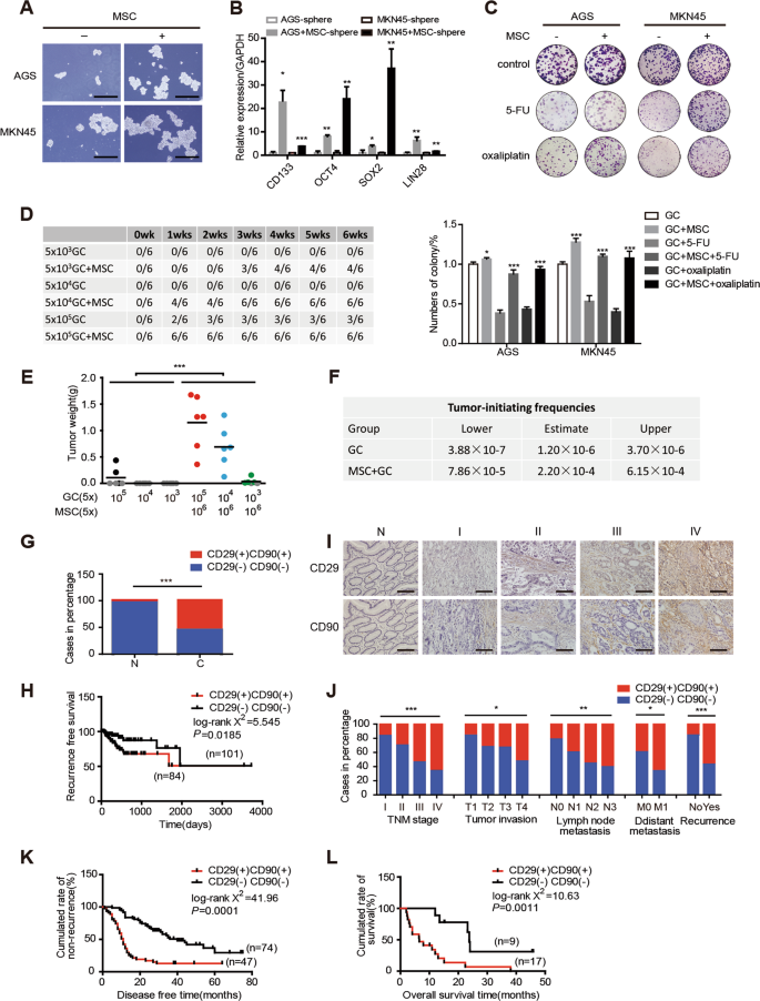 MSC-regulated lncRNA MACC1-AS1 promotes stemness and