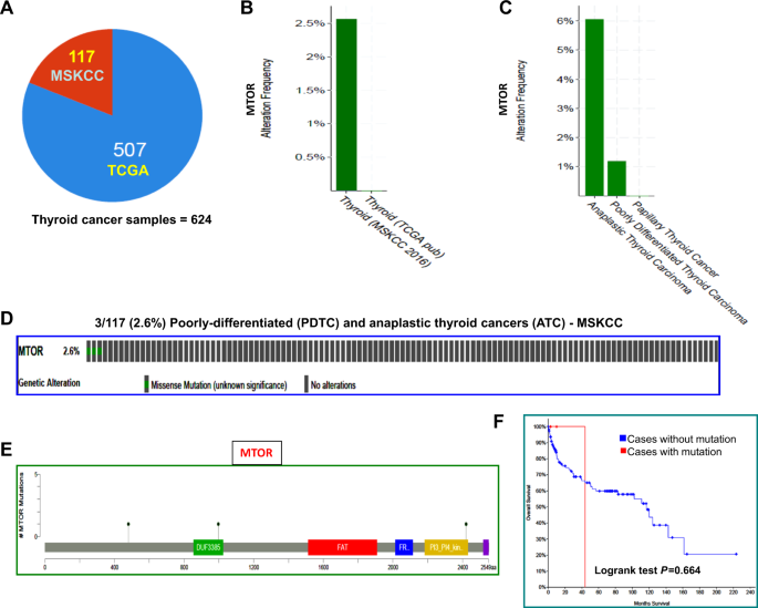 Identification and characterization of two novel oncogenic mTOR