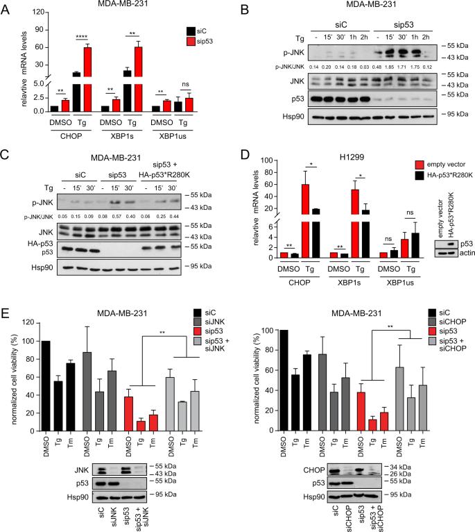 Mutant p53 improves cancer cells' resistance to endoplasmic