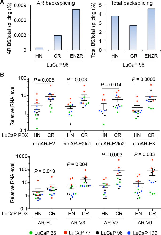 Circular Rnas Add Diversity To Androgen Receptor Isoform