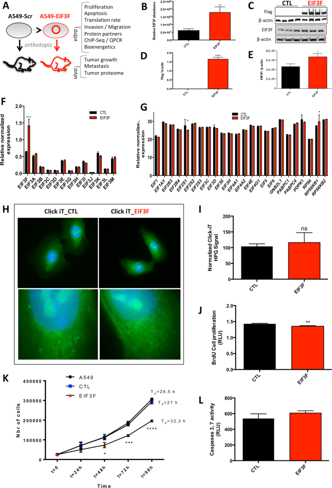 Nuclear control of lung cancer cells migration, invasion and bioenerge