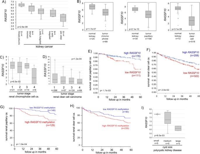 Rassf10 Is Frequently Epigenetically Inactivated In Kidney Cancer And Its Knockout Promotes Neoplasia In Cancer Prone Mice Oncogene