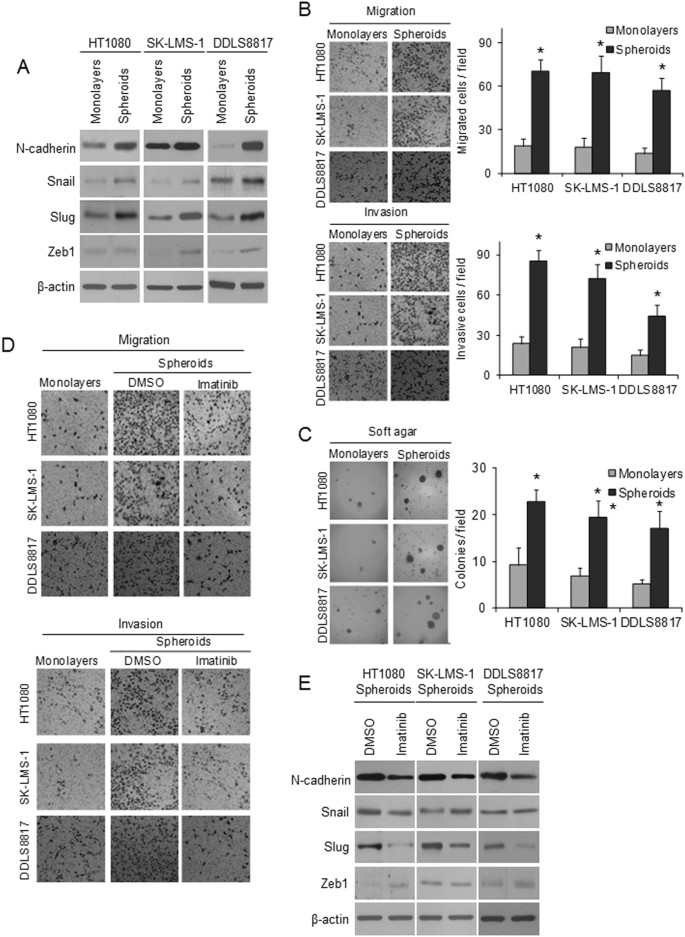 Platelet-derived growth factor receptor-α and -β promote