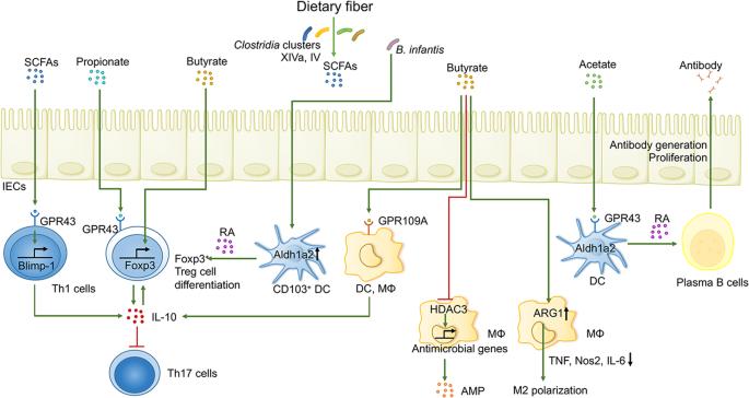 Demystifying the manipulation of host immunity, metabolism, and extrai