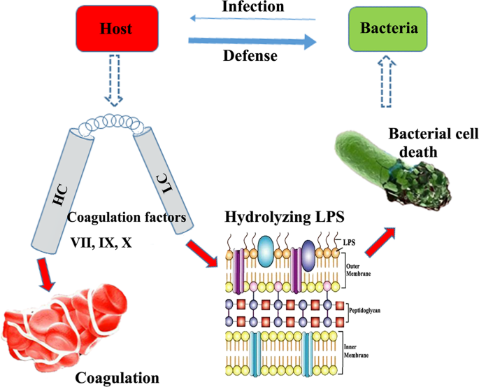 Coagulation factors: a novel class of endogenous host antimicrobial pr