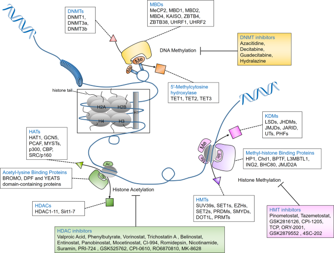 Targeting Epigenetic Regulators For Cancer Therapy Mechanisms And Advances In Clinical Trials Signal Transduction And Targeted Therapy