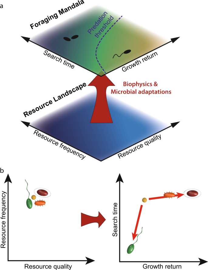 A Foraging Mandala for Aquatic Microorganisms   The ISME Journal