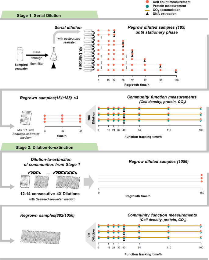 Interactions in self-assembled microbial communities