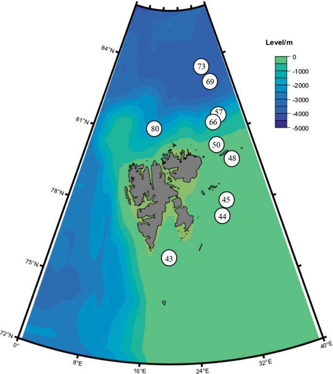 Arctic marine fungi: biomass, functional genes, and putative
