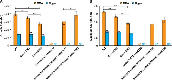 Methylamine-specific methyltransferase paralogs in