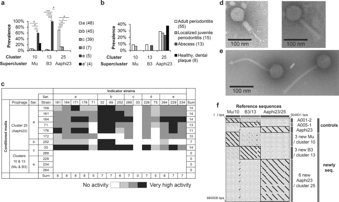 Diversity patterns of bacteriophages infecting Aggregatibacter and