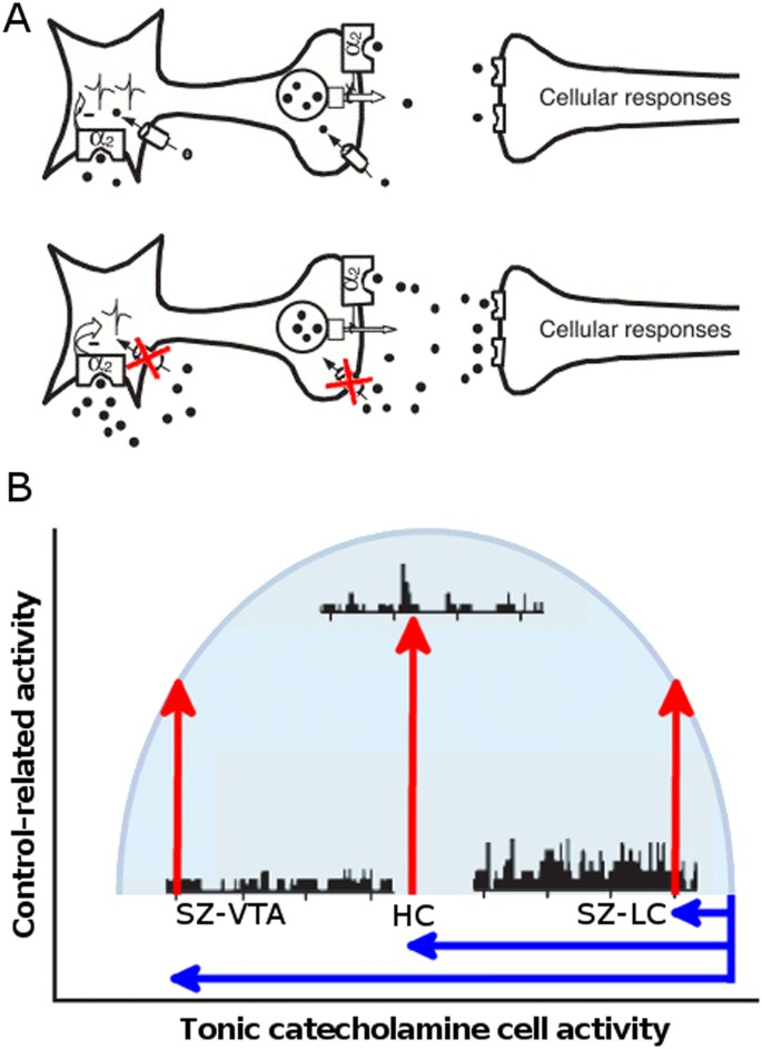 Altered brainstem responses to modafinil in schizophrenia