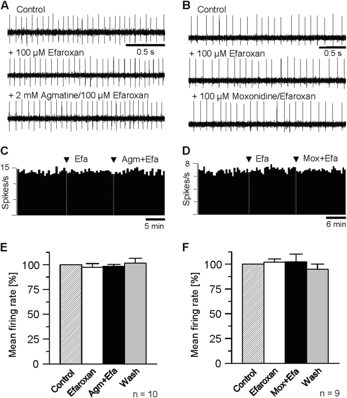 Agmatine modulates spontaneous activity in neurons of the