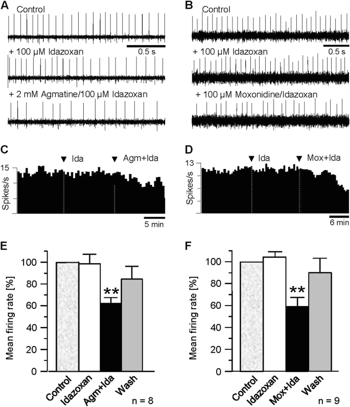 Agmatine modulates spontaneous activity in neurons of the rat medial