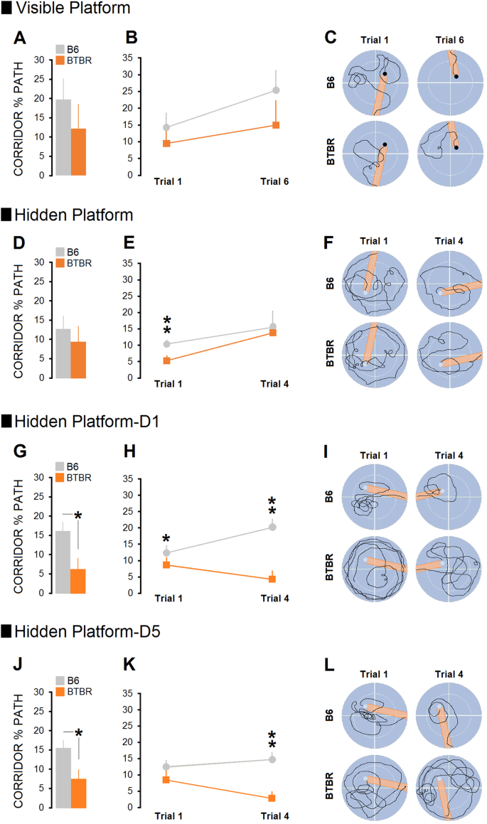 Non-diagnostic symptoms in a mouse model of autism in
