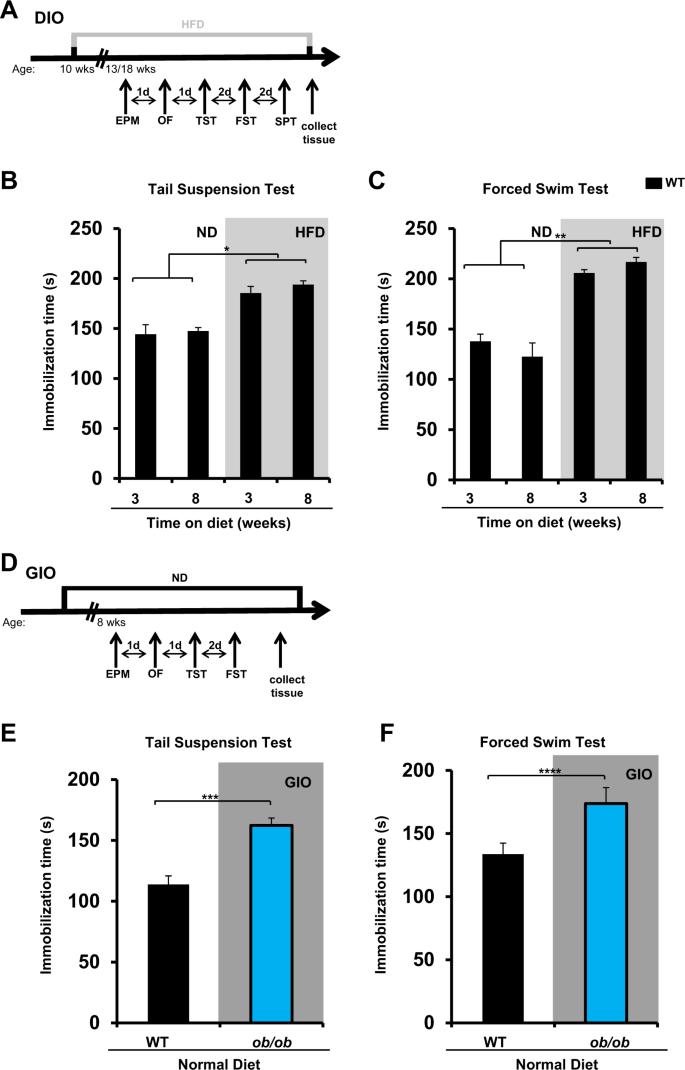 high fat diet metabolism phenotypes