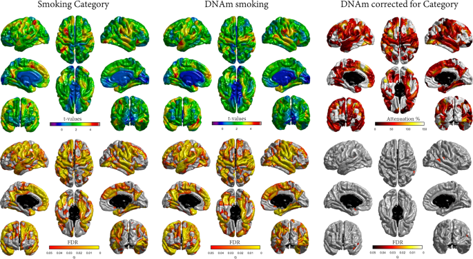 Epigenetic signatures of smoking associate with cognitive function, br