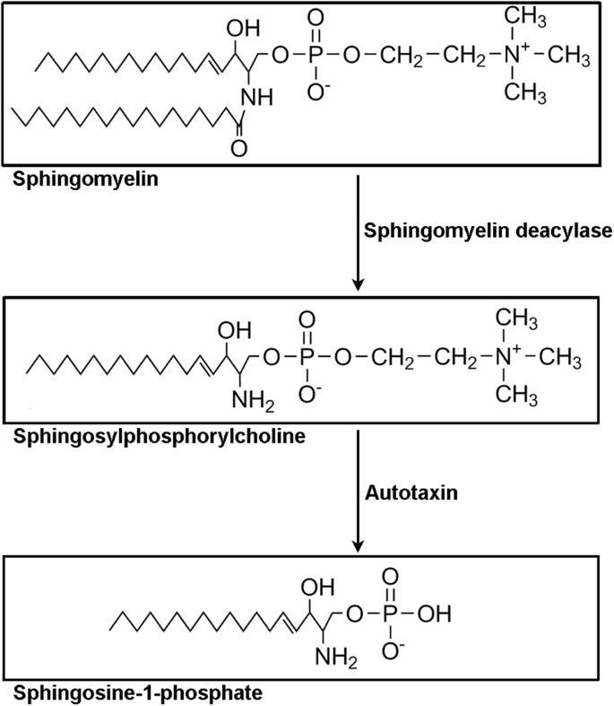 Emerging roles of sphingosylphosphorylcholine in modulating