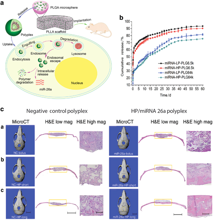 Biomimetic delivery of signals for bone tissue engineering | Bone