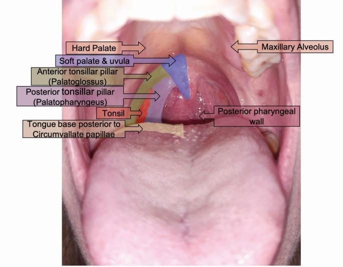 Papilloma uvula okozza. Humán papillomavírus – Wikipédia